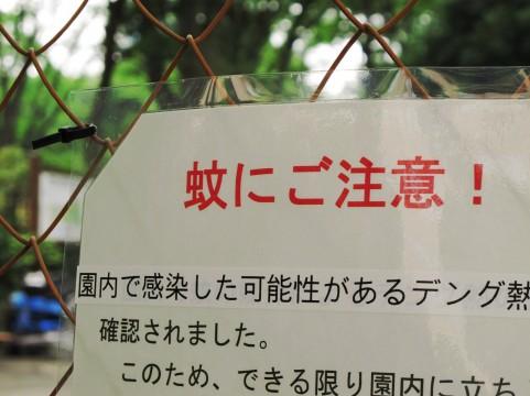 デング熱、2015年の日本の対策や薬の開発状況は?